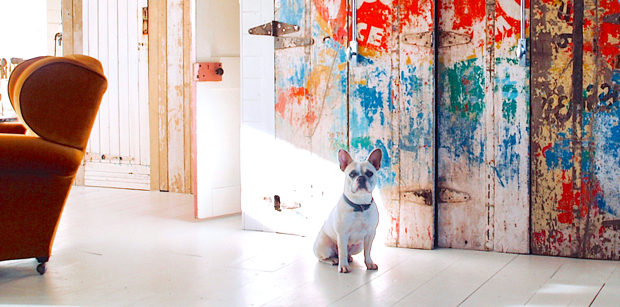 Bunny the French bulldog at Lander House, Camber UK