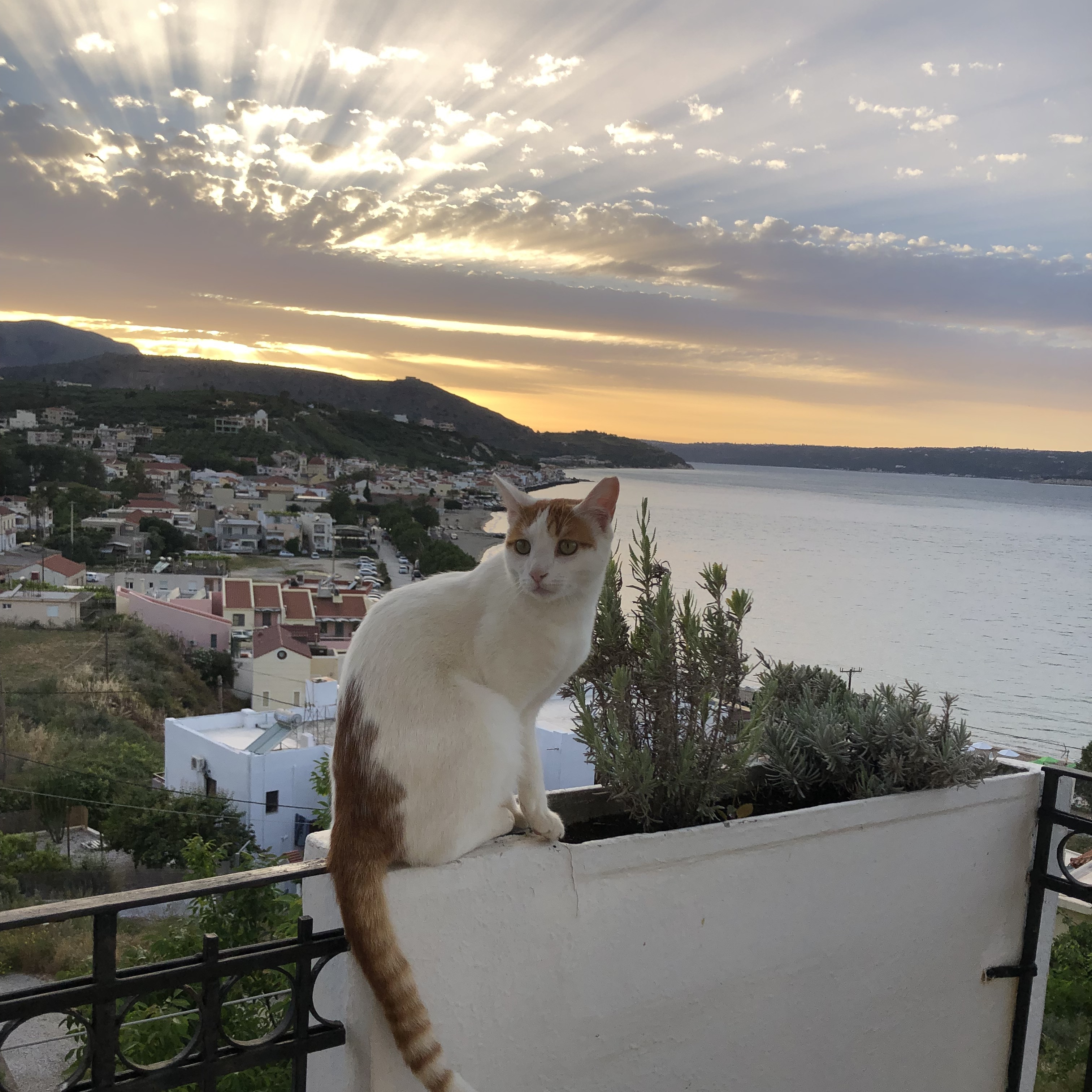 Our hotel cat loves the sunset!